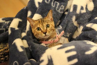 車中泊用着る毛布に。。くるまれにゃ