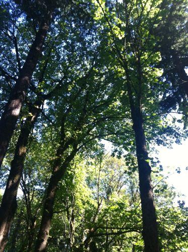 ワシントンパークの木