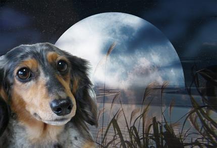 ススキと月のコピー