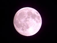 月ピンク2