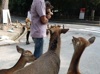 奈良公園6P1080543