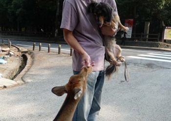 奈良公園5P1080542