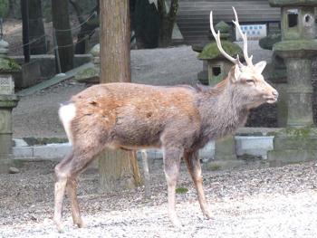 奈良公園11P1080554