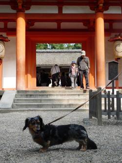 奈良公園12P1080556