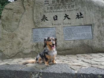 奈良公園8P1080553