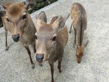 奈良公園10P1080544