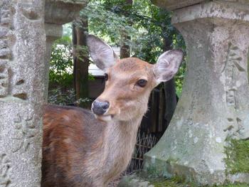 奈良公園15P1080559