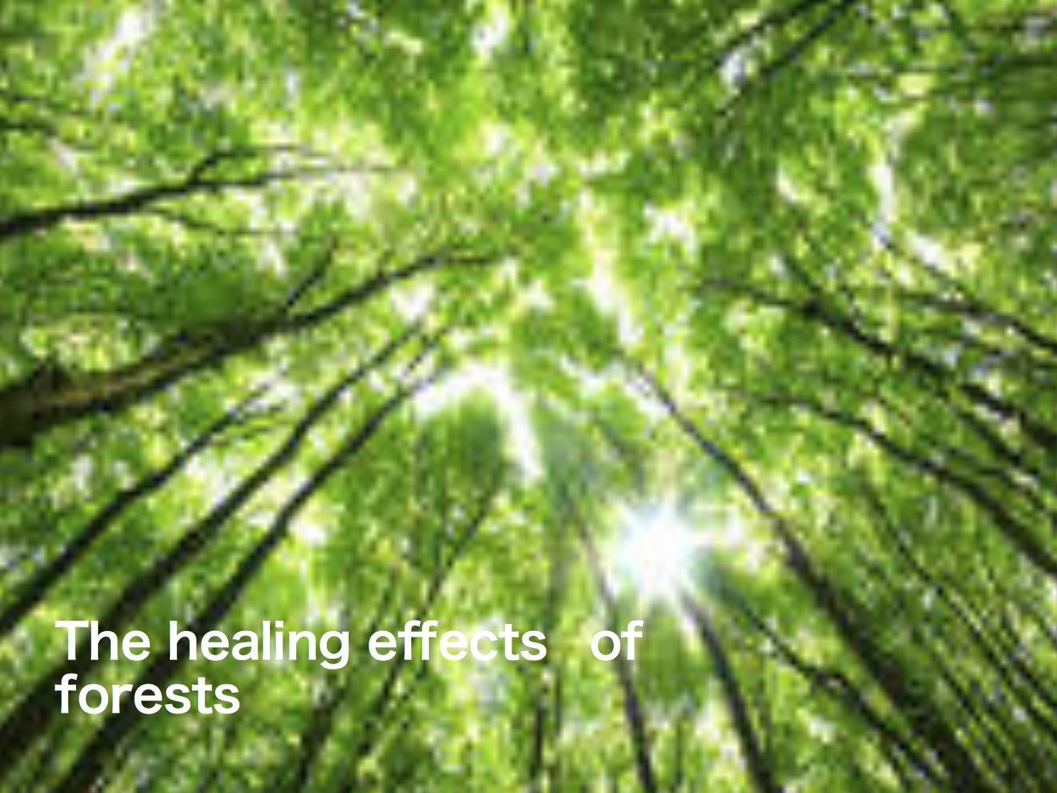 森はストレスを軽減