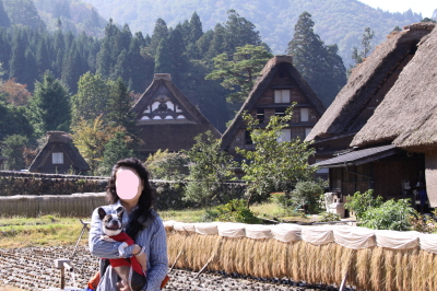 高山旅行 ① 白川郷編
