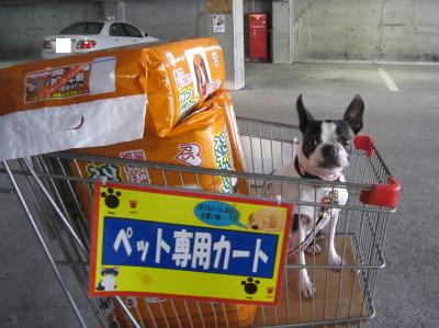 ショッピングデーと なった一日
