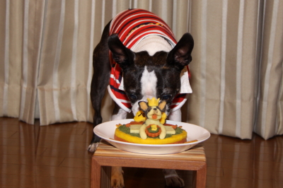お誕生日おめでとう~  5歳になったパンチ