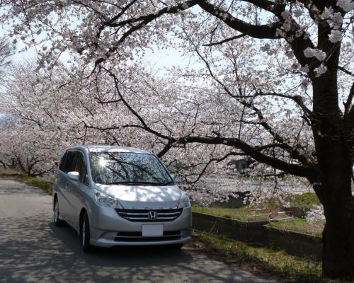 130415保田あたり桜