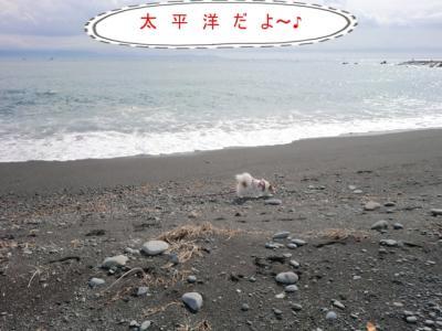 コピー (2) ~ CIMG0024