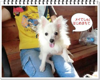 CIMG9943_20111011230704.jpg