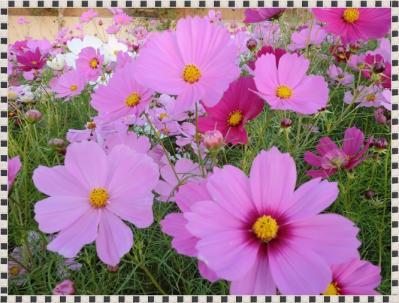 CIMG9994_20111015223828.jpg
