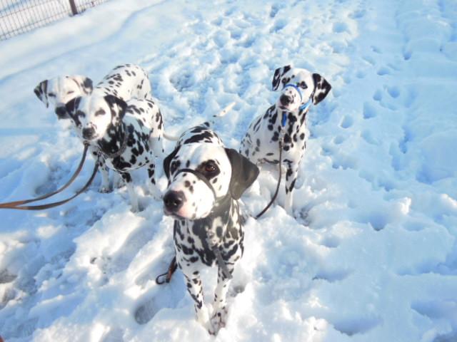 雪遊びと豚耳 031