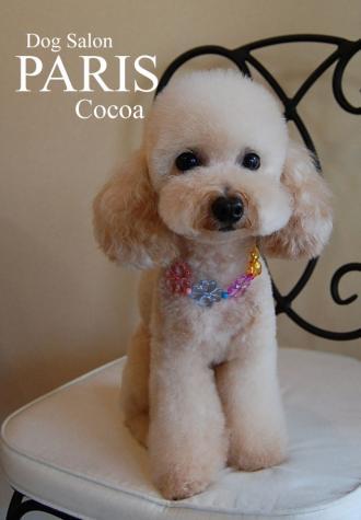 cocoa 1 0903