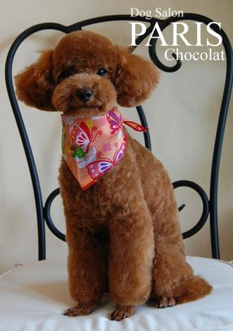 chocolat-2 縮