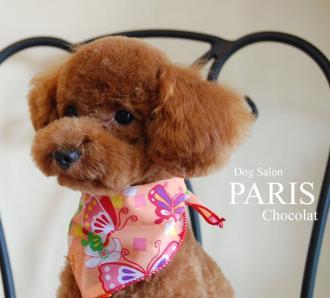 chocolat-3 縮