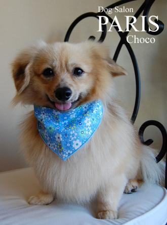 choco-1-縮