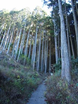 4穿戸羅漢山登山道 (2)