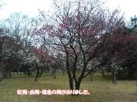 紅梅・白梅・桃色の梅