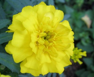 ライラさんと皇居ラン 植込みのお花2