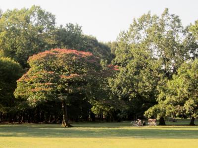都立野川公園 紅葉の始まり