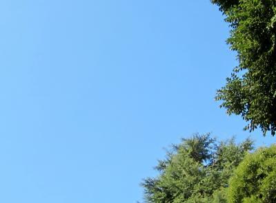 都立野川公園 真っ青な空