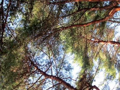 都立野川公園 木々から見える空