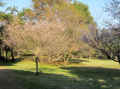 都立野川公園 北側 桜の木かな?