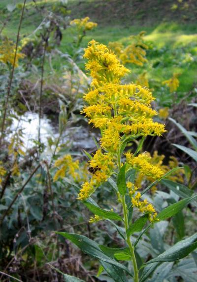 都立野川公園 黄色いお花