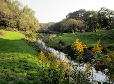 都立野川公園 岸辺の風景