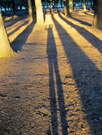 都立野川公園 私の影