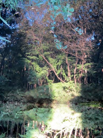 都立野川公園 自然観察園 鏡池