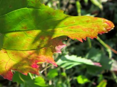 都立野川公園 自然観察園 紅葉