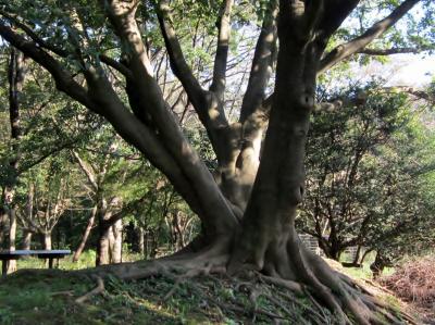 都立野川公園 大きな木