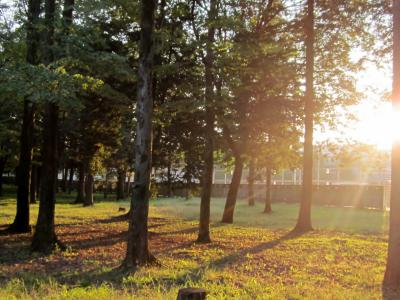 都立野川公園 木々からの木洩れ日