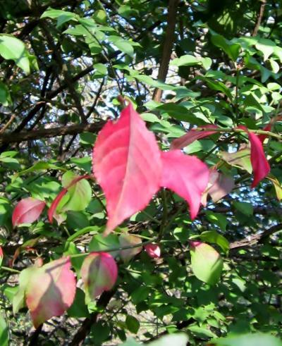 都立野川公園 自然植物園 木々の紅葉