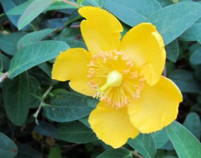 都立野川公園 南側 黄色い花