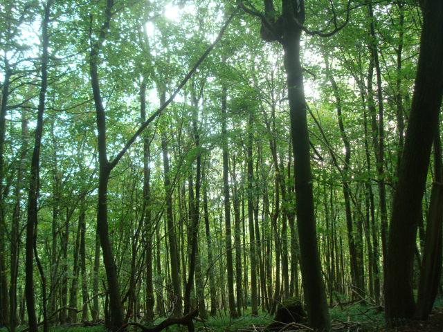 Titsey walk竹やぶのような景色