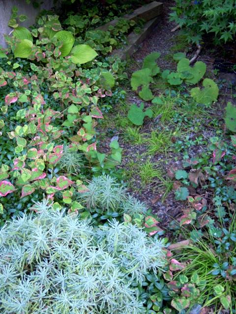 my-garden 029 (4)