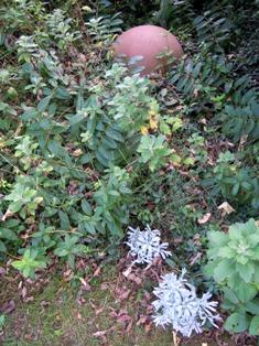 my-garden 078