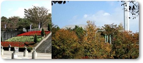 紅葉を求めて公園散歩