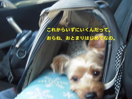 DSCN1279_convert_20110927211654.jpg