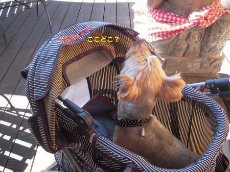 DSCN1286_convert_20110927211907.jpg