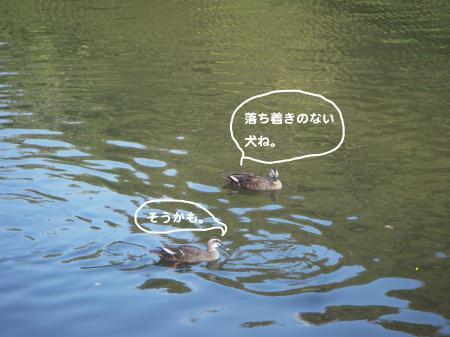 DSCN1482_convert_20111012103356.jpg
