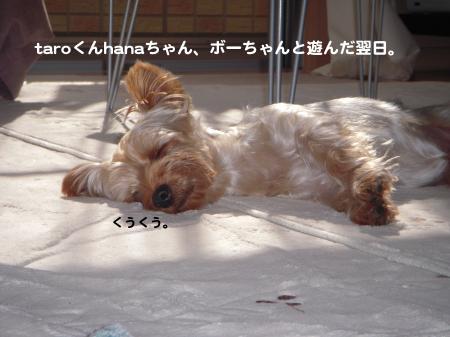 DSCN1593_convert_20111109225932.jpg