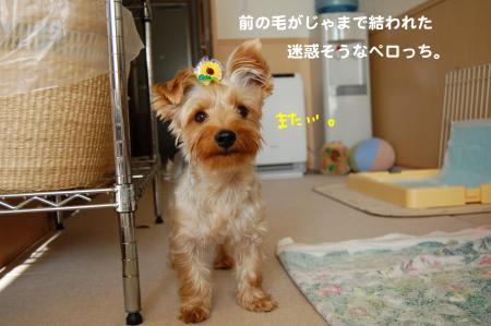 DSC_0001_convert_20111101115520.jpg