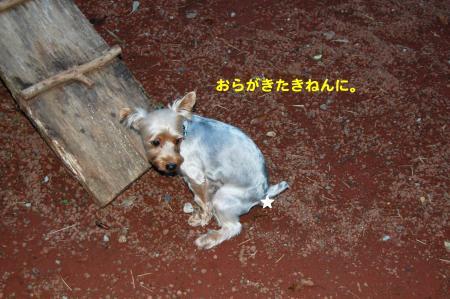 DSC_0003_convert_20110929104943.jpg